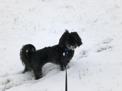 Cocoa-snow